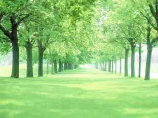 绿色树林护眼动态屏保