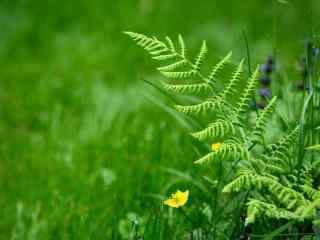小清新绿色植物动