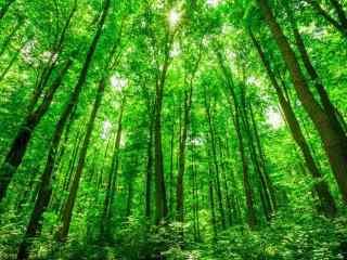 翠绿色的树林护眼