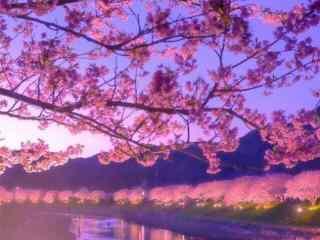 唯美樱花林夜景动