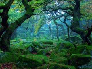 唯美震撼的森林动
