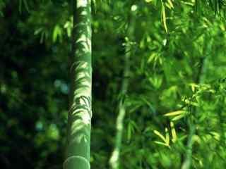 夏日清凉竹林动态