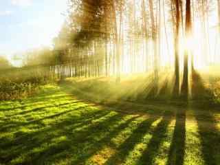 唯美阳光中的森林屏保