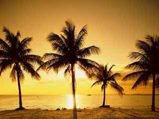 黄昏下的海边椰林
