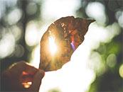 阳光下的黄色枯叶