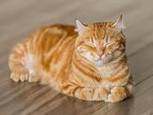 犯困的橘猫睡觉打盹的桌面壁纸电脑屏保
