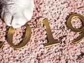 2019数字可爱猫爪