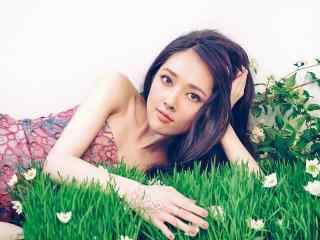 美女明星郭碧婷草地上的写真图片桌面壁纸