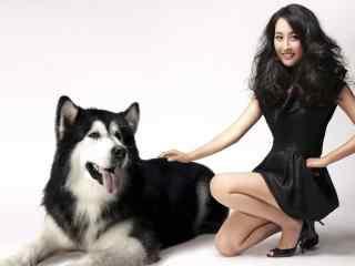 马苏与可爱的哈士奇狗狗合照图片