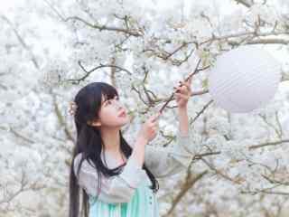 汉服齐胸儒裙—在樱花树下挂灯笼桌面壁纸