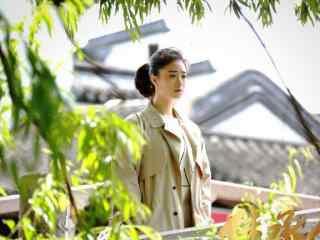 继承人蒋欣女律师汤宁桌面壁纸