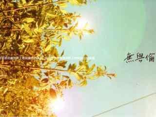 苏打绿无与伦比的美丽唯美专辑文字图片桌面壁纸
