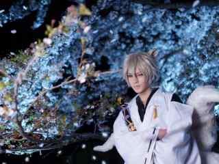 妖狐×仆SS之cosplay站在樱花树下的御狐神双炽桌面壁纸