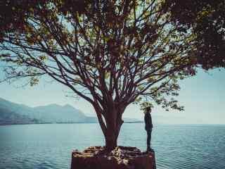 大理洱海树下的男人风景图片桌面壁纸