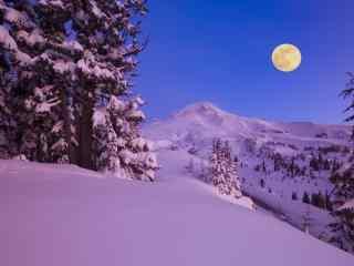 雪地上的一轮明月图片桌面壁纸