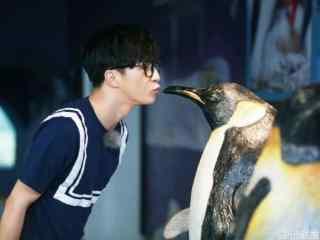 薛之谦与可爱企鹅接吻桌面壁纸