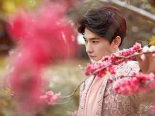 杨洋桃花树下浪漫帅气写真壁纸图片