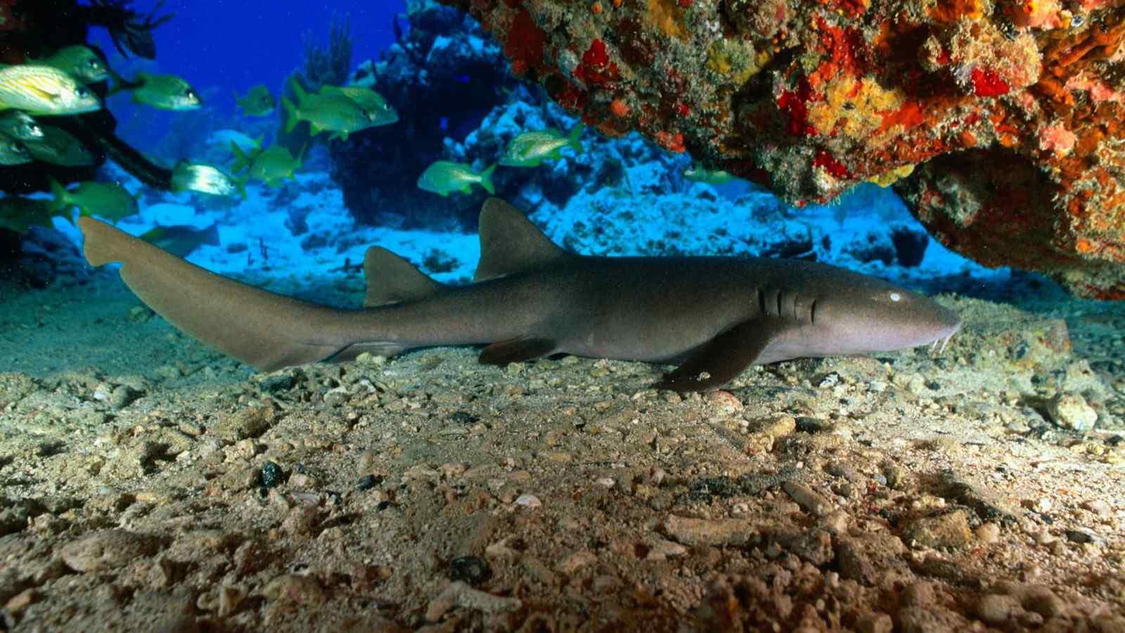 比目鱼海底动物壁