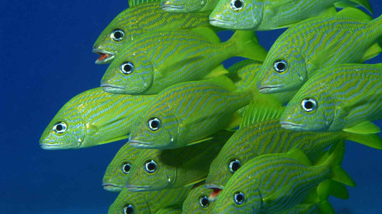 唯美绿色鱼群壁纸