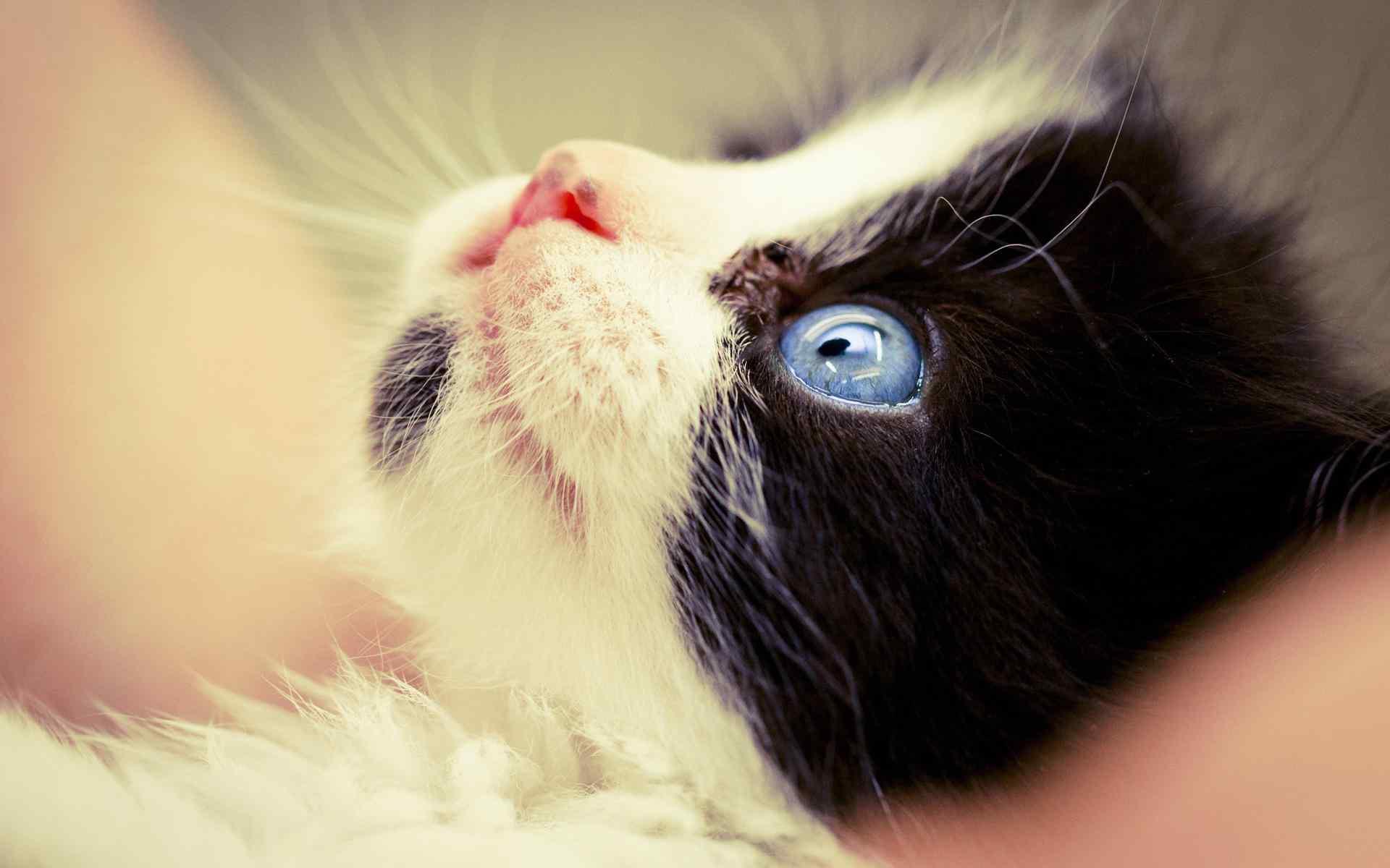 瞪眼的猫咪