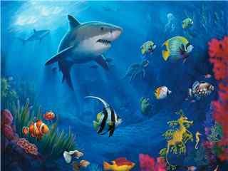美丽的海底世界桌面壁纸之大鲨鱼