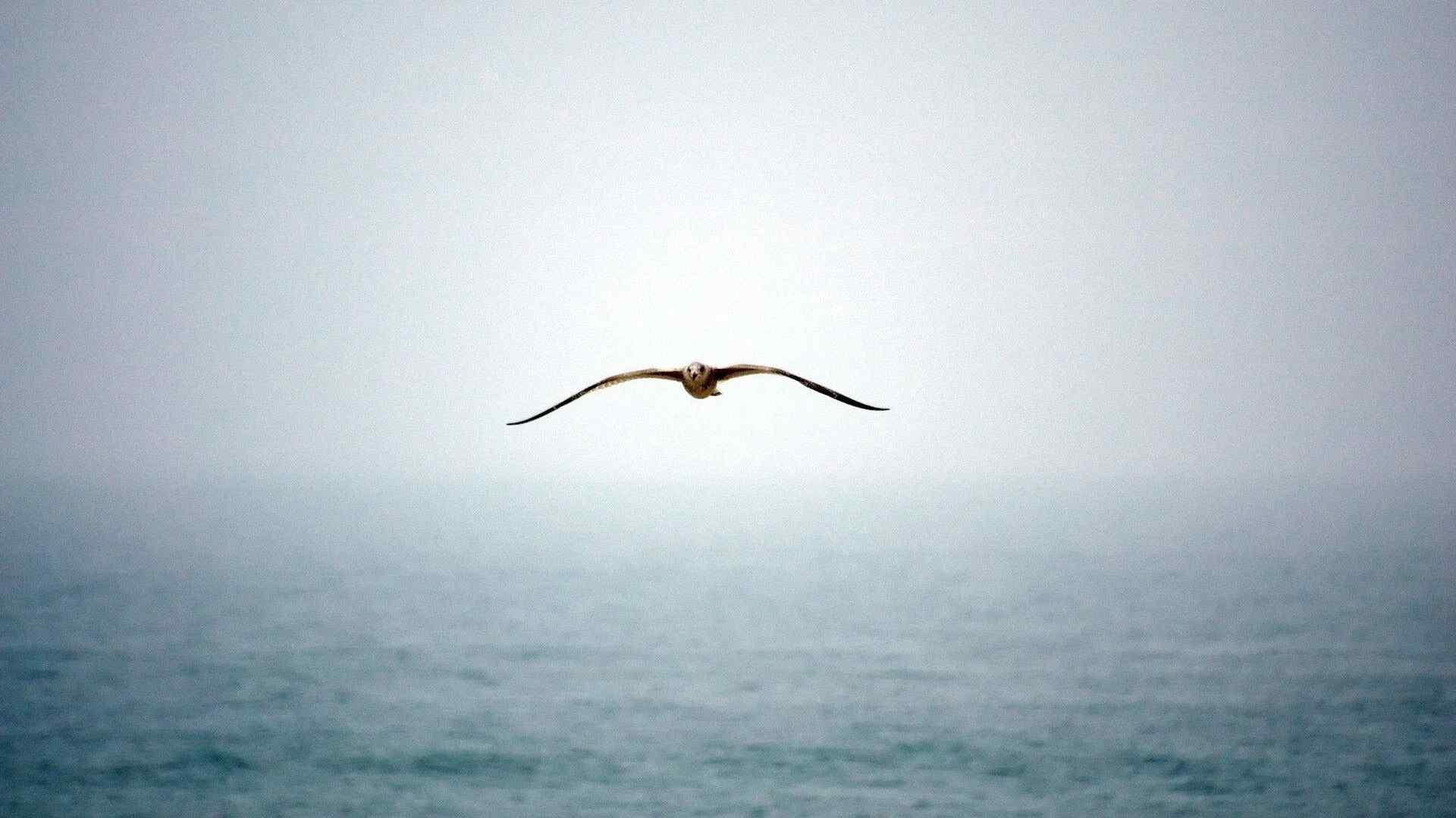 翱翔海鸥电脑壁纸