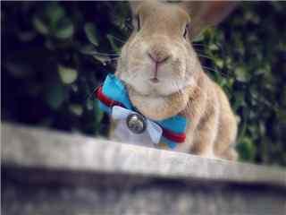 可爱动物小兔子电脑桌面壁纸下载