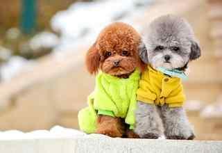 毛茸茸小狗狗可爱动物壁纸