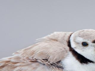 小鸟错觉宽屏动物