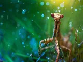 唯美可爱自然动物