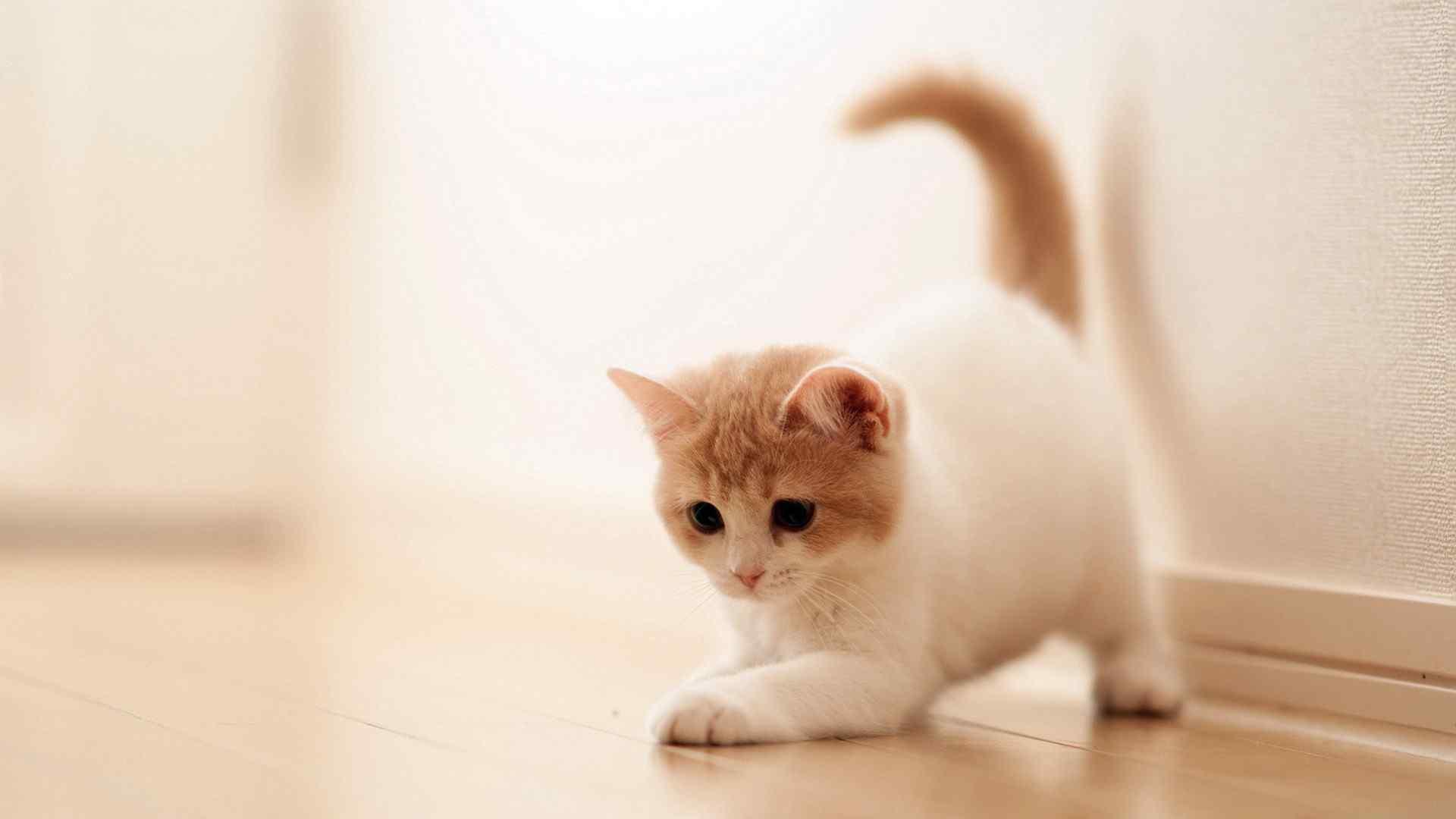 可爱猫咪高清壁纸图片大全