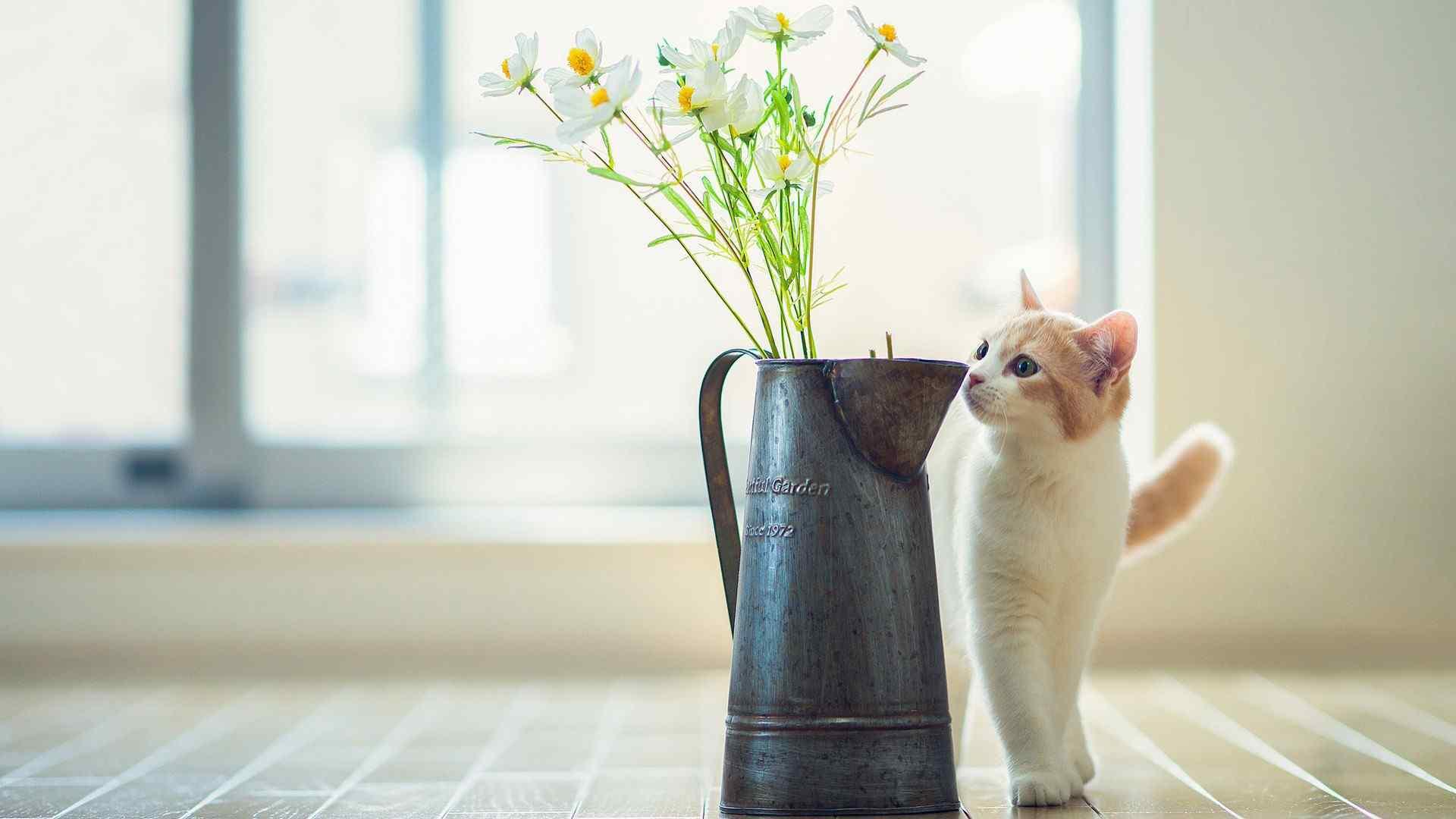 可爱猫咪图片桌面高清壁纸下载大全