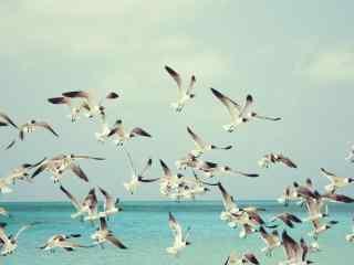 成群飞翔海鸥唯美