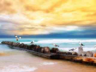 海边沙滩上的海鸥高清桌面壁纸下载