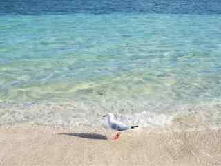 精选海边沙滩孤单海鸥高清图片桌面壁纸下载