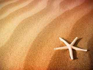 沙滩孤单海星高清
