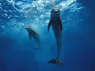 鲸鱼在蓝色静谧的水下畅游桌面壁纸
