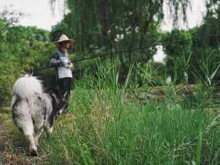 阿拉斯加犬与钓鱼青年风景照桌面壁纸