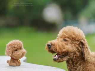 泰迪遇见洋娃娃同伴桌面壁纸