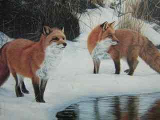 雪地湖边的狐狸高清电脑桌面壁纸