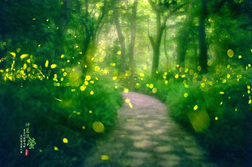 萤火虫飞舞的林间小道桌面壁纸