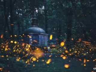 夏夜林间萤火虫壁纸图片下载