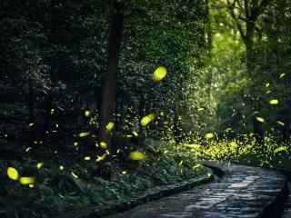 森林小道上的萤火