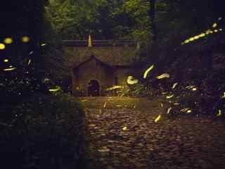 林荫小道上的萤火虫桌面壁纸