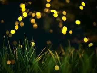 草地上的萤火虫图片桌面壁纸