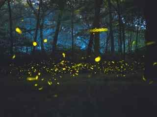 傍晚森林萤火虫桌