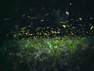 夏夜萤火虫桌面壁纸