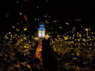 萤火虫和灯盏桌面壁纸