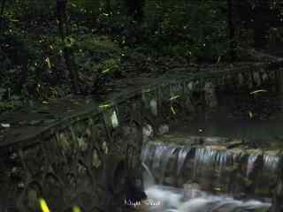萤火虫和森林溪流桌面壁纸
