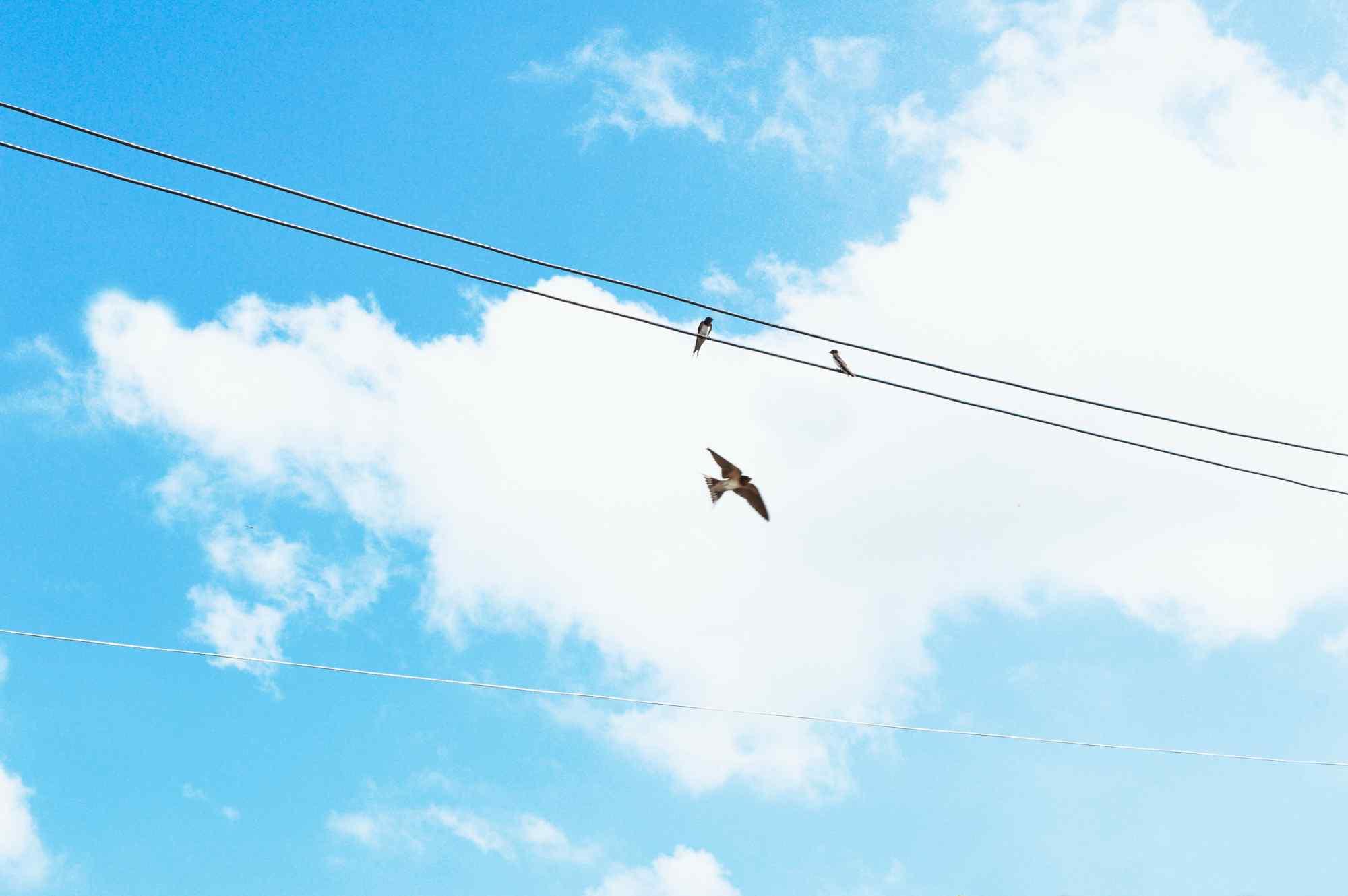 天空中的小燕子桌面壁纸